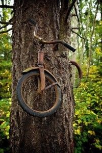 Bike in tree, Vashon Island