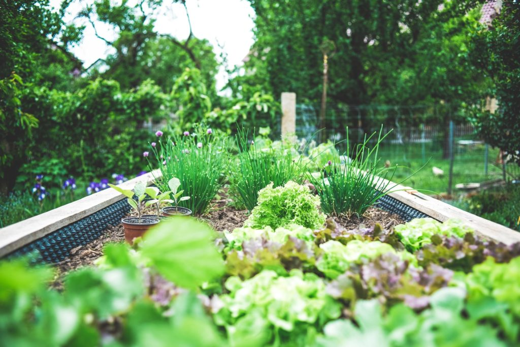 garden with flowers, green plants, green vegetables in a raised bed Tag: cognitive behavioral self-care strategies