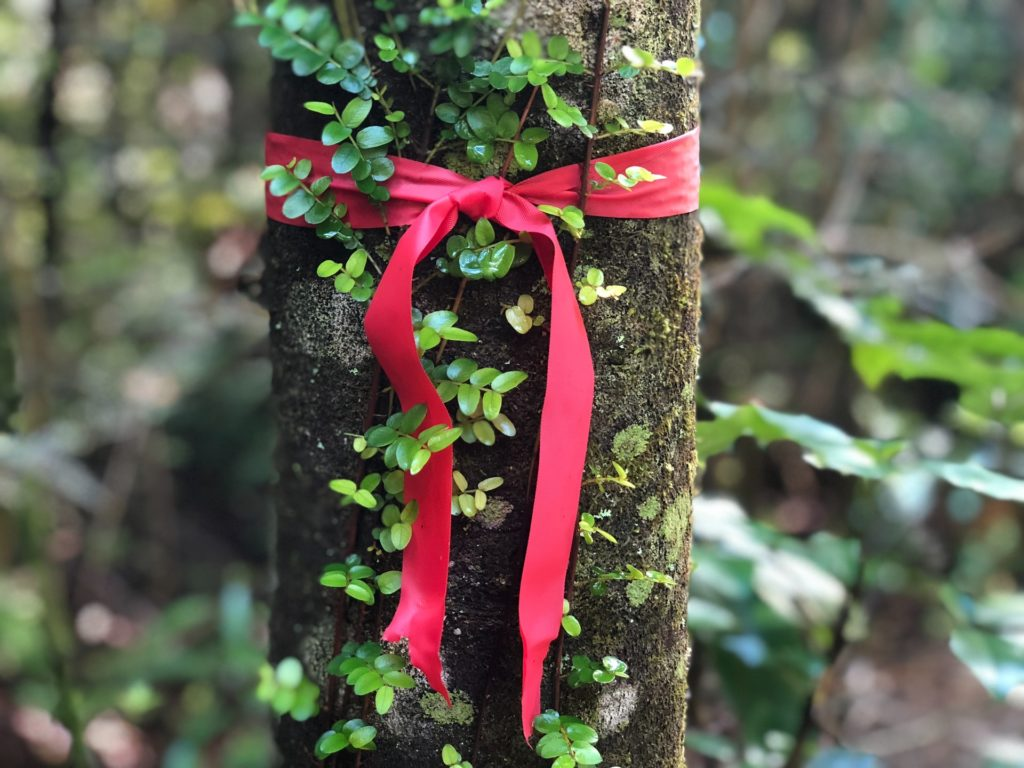 brown tree trunk with green vines wrapping around trunk with a red ribbon tied around the trunk with green leaves and other trees in the background Tag: affirmations self-care strategies