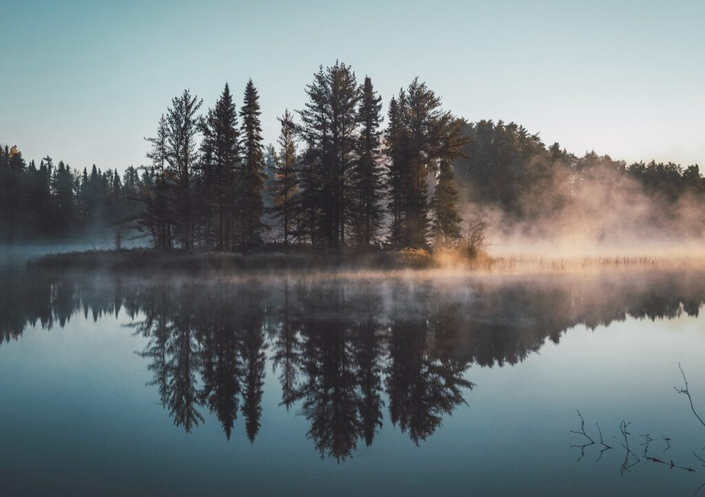 green evergreen forest of trees on the edge of a lake with fog coming off the water at the trees edge Tag: goodbye 2020 annual reflection